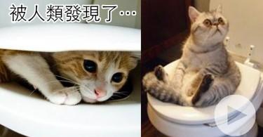 【影片】號外!驚見喵星人用人類廁所!你們終於露出真面目了?