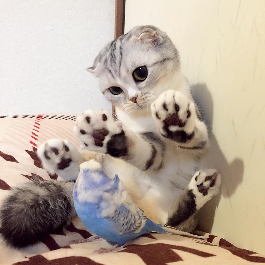 壁纸 动物 狗 狗狗 猫 猫咪 小猫 桌面 1080_1081