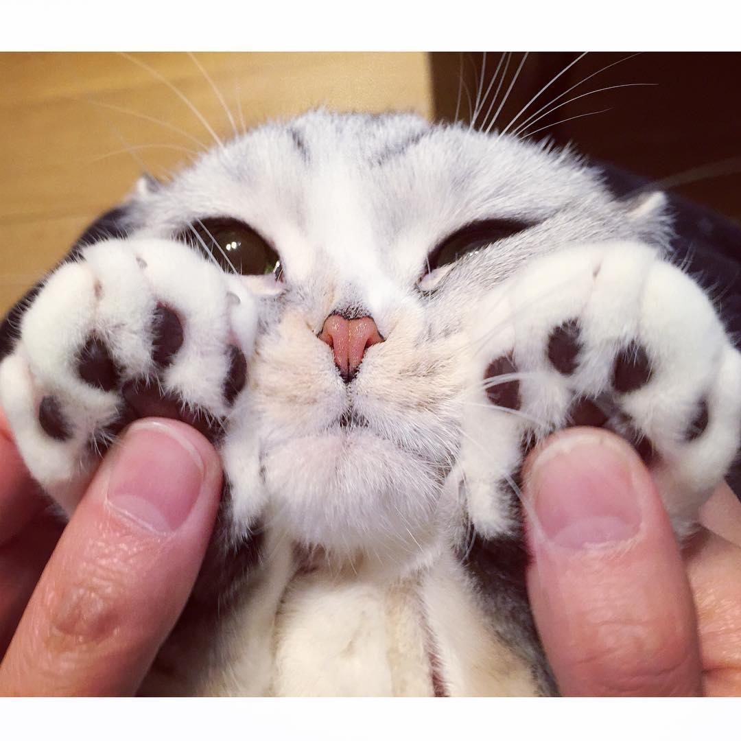 壁纸 动物 猫 猫咪 小猫 桌面 1080_1080