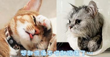 不再讓貓奴擔心!3個方法讓貓貓愛上洗澡…香噴噴哦~
