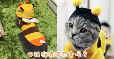 是蜜蜂也是貓~萌萌主子化身小蜜蜂超可愛!