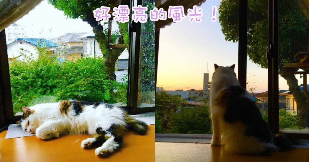 朕最喜欢看风景啦~日本喵星人常待在窗边欣赏景色变化!