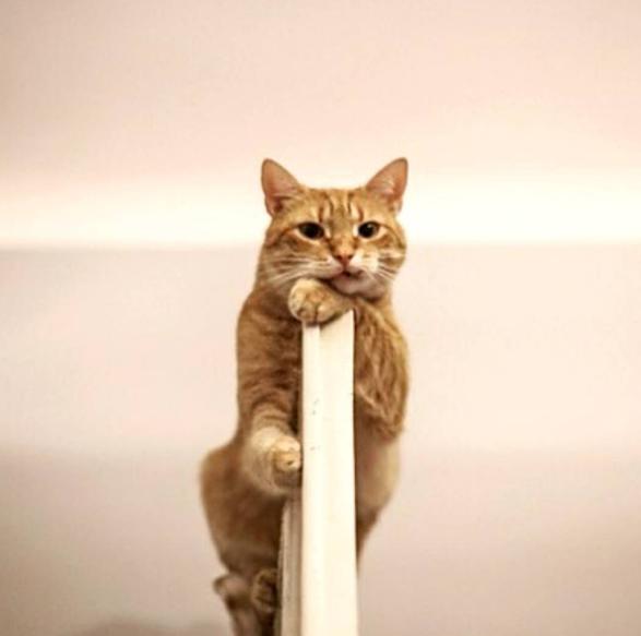 壁纸 动物 鹿 猫 猫咪 小猫 桌面 587_583