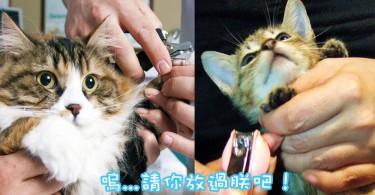 齊來面對貓奴必經的試煉~幫主子剪指甲的5招秘訣!