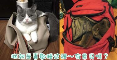 貓奴的袋都逃不過的命運~7位把袋子變成睡袋的喵星人!