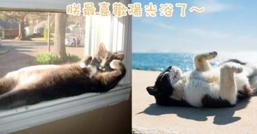 曬曬太陽最舒服了~8位超享受陽光浴的喵星人!