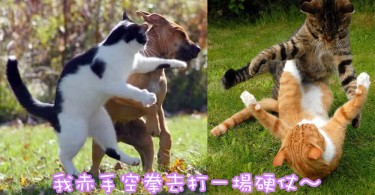世界上最萌的格鬥專家~喵星人打架的5個款式!