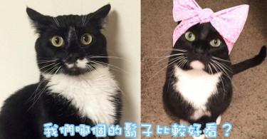 各有特色的黑貓主子~美國白下巴與白鬍子喵星人!