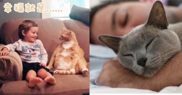 貓奴一起來續寫句子!5個「幸福就是...」的生活片段~
