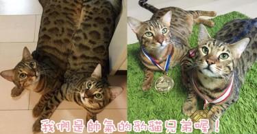 有著我便有著你~日本超合拍豹貓兄弟出雙入對!