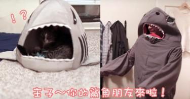 貓奴打扮成主子最喜歡的鯊魚~主子反應竟然是這樣!