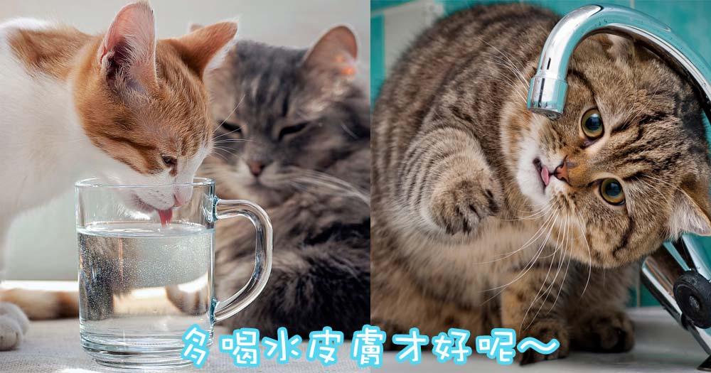 多喝水才健康!讓主子多喝水的5個妙法~