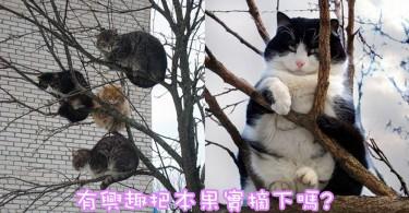 秋天來咯!一起收割樹上肥美的果實~10張胖貓上樹超可愛!