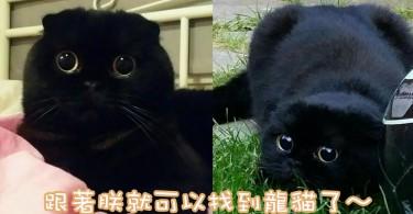 會走動的煤炭屎鬼!挪威黑貓主子黑得只剩一雙大眼睛!