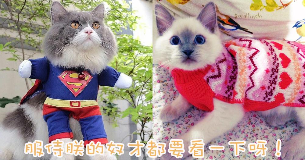 天氣轉涼~主子要添衣啦!貓奴替主子穿衣服必須留意的5件事!