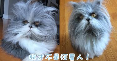 已經分不出是貓還是狗了!長毛飄逸的霸氣波斯貓主子!