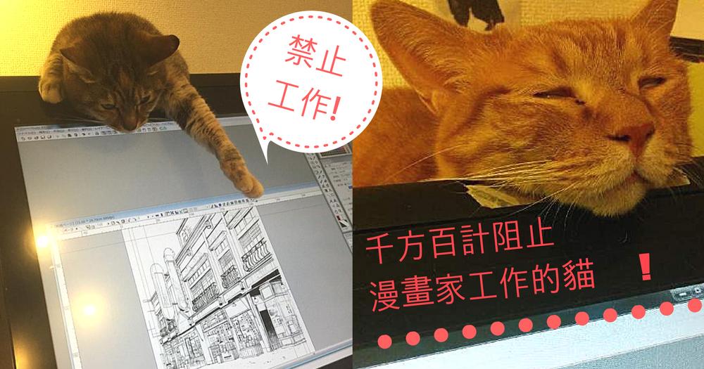 漫畫家養貓咪的苦惱~禁止專心工作不理主子!不要繪圖跟主子玩好不好?