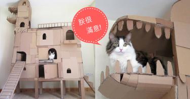 手作達人為主子蓋一座恐龍造型的紙箱城堡,朕以後就懶在這座專屬城堡了!