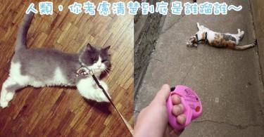 你確定真的想帶主子外出散步嗎~9個讓人笑翻了的蹓貓場景!