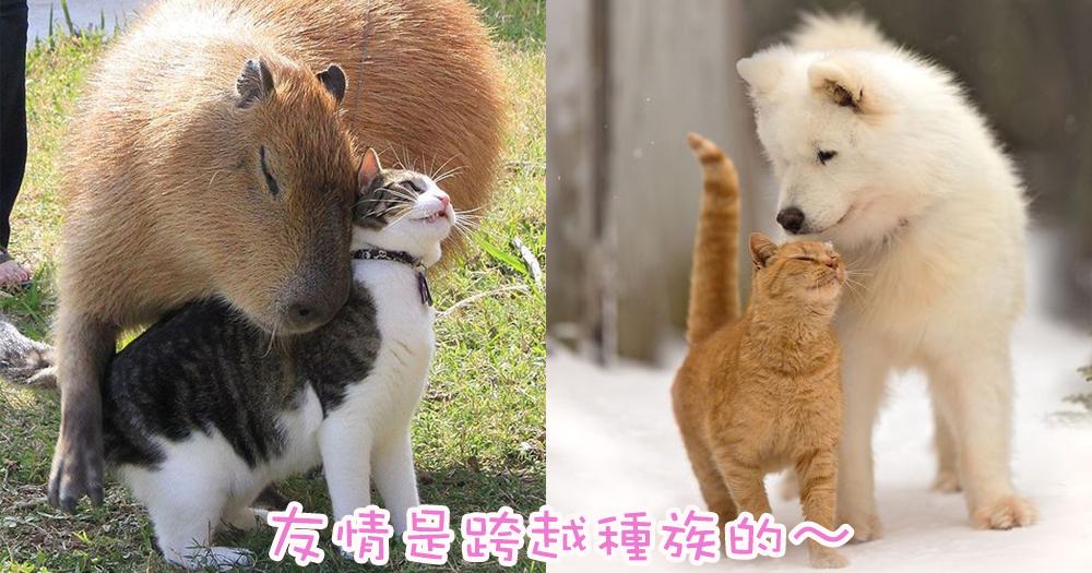 喵星人也可以是親善大使~9張主子與其他動物和諧共處的溫馨照片!