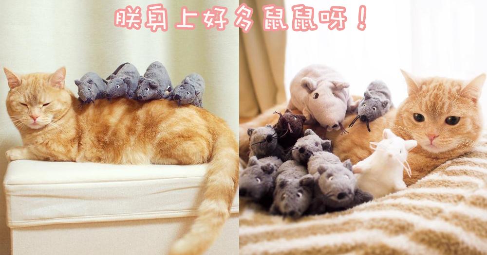 奴才的惡作劇!為什麼朕身邊全是老鼠~日本與公仔為伴的可愛喵星人!