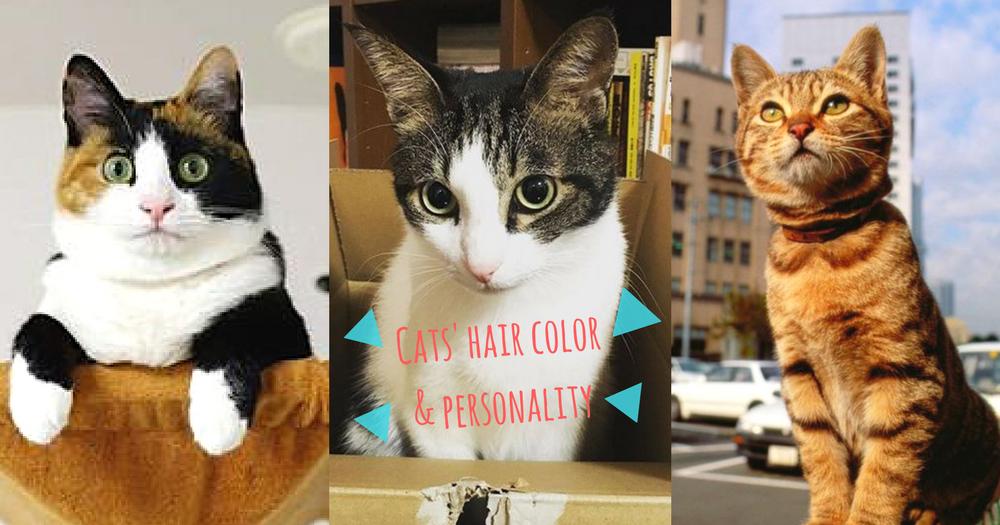 原來貓咪的毛色跟性格有關?10種毛色的貓咪特質~你的主子屬哪一種?