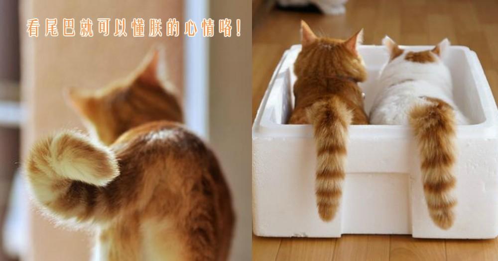 6種貓咪尾巴的身體語言,只要懂得看尾巴就能更了解主子的心情咯!