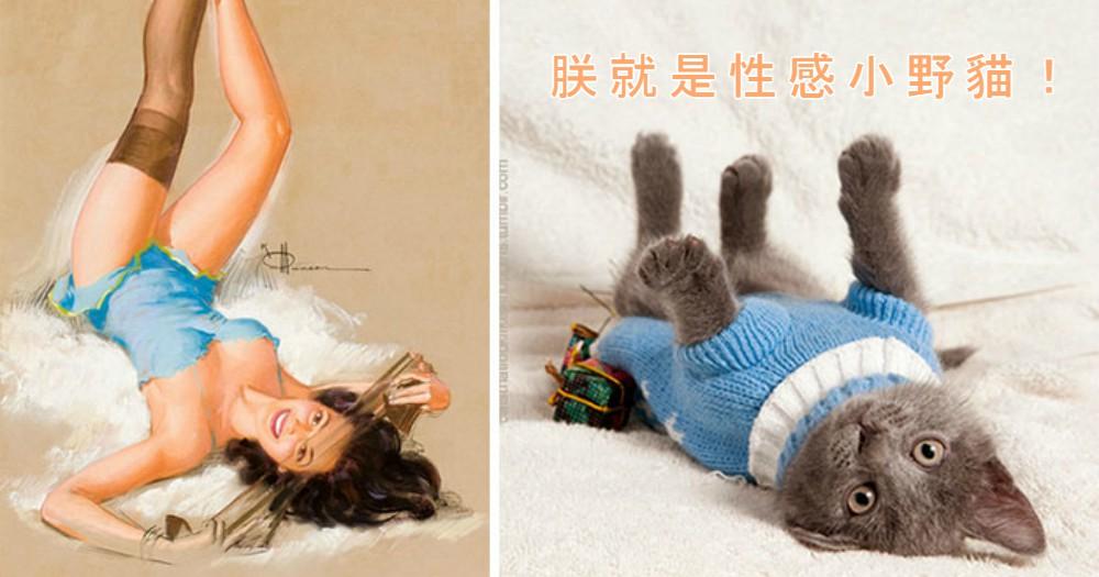 這絕對是名副其實的「性感小野貓」啊!20個貓咪摸特兒來展示性感大解放咯!