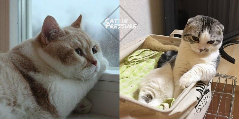 當貓也是有很大壓力的!5個令主子出現壓力的原因,奴才你給我好好看清楚!