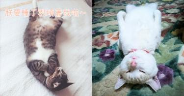 主子就是最愛睡!喵星人的8種超可愛睡姿,就是連睡覺也要讓貓奴萌倒啊!