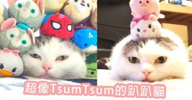 超萌TsumTsum貓!總愛趴在地上的軟趴趴貓兄妹~主人就愛將我們跟TsumTsum混在一起!