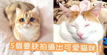 捕捉主子的可愛萌樣~5個拍攝要訣讓你拍出可愛貓咪!