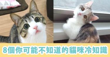 你了解主子嗎?8個你可能不知道的貓咪冷知識~原來貓的記憶力很好啊!