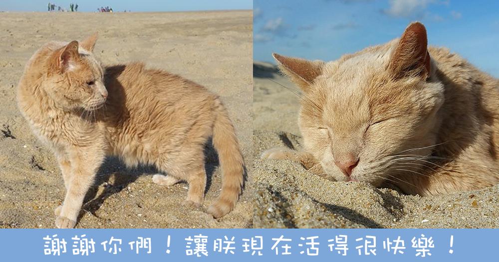 貓奴領養腎衰竭老貓⋯跟他四處遊歷完成心願!給他最美好的餘生!