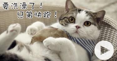 【影片】喵星人!打敗浴室怪獸的任務就交給你了!