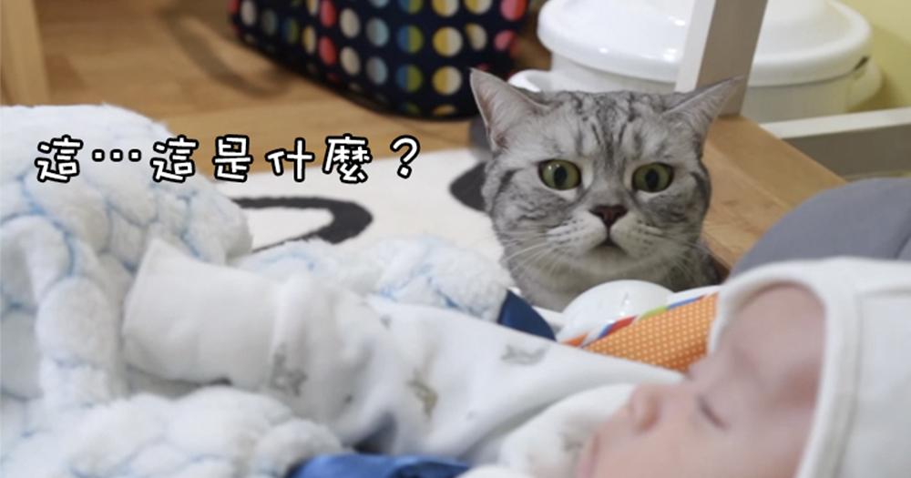 【影片】當主子遇上迷你貓奴?表現滿分⋯超驚呆又溫馨!