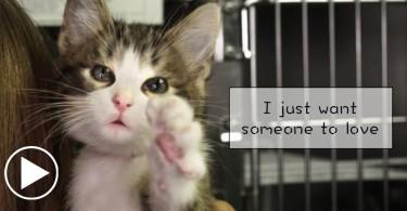 【影片】聽聽牠們的心聲⋯在收容所裡,牠們只有一個心願!