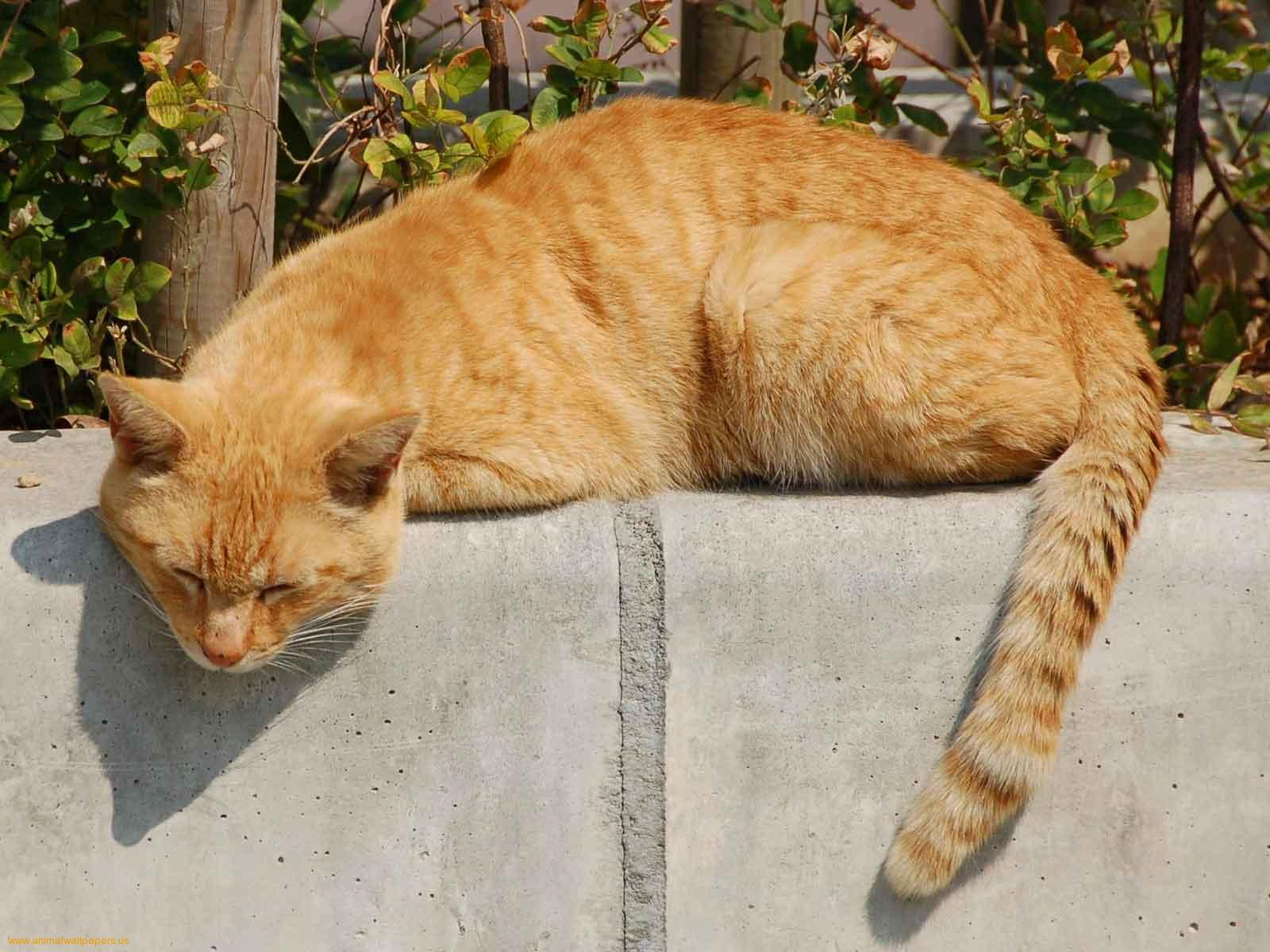 catsneedcare http://catsneedcare.com/cat-has-bent-tail/