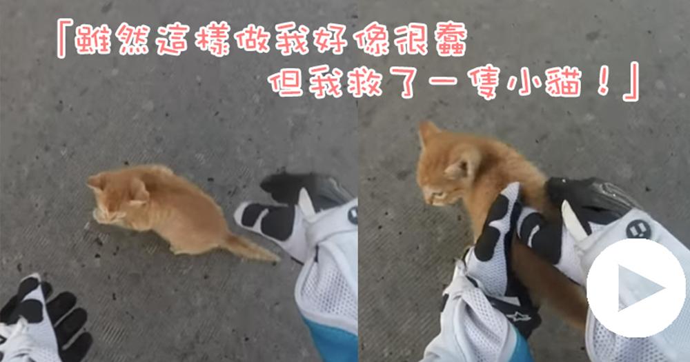 【影片】不是每個人都能做到!看到在危險中的小貓,她亳不猶豫地⋯