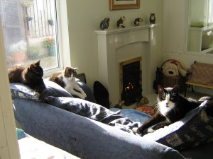 lincolnshiretrustforcats-1