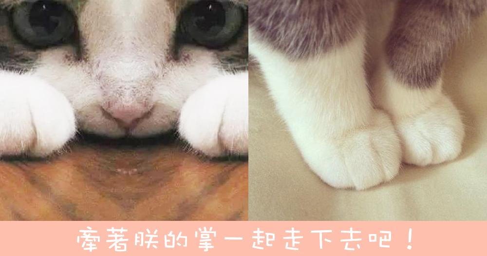 好想握著一輩子不放手!超療癒~9雙貓咪毛茸茸手掌大集合!