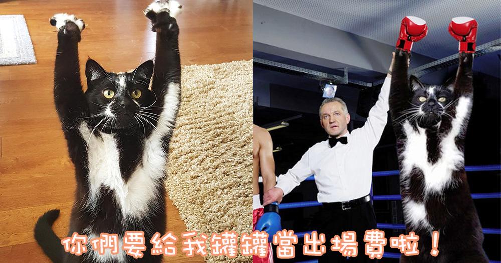 舉起你的雙手!超爆笑~全球瘋狂改圖的萬歲喵星人!