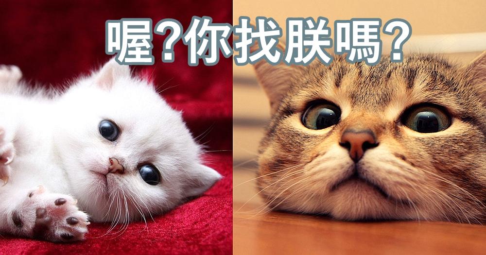 訓練喵星人記住自己的名字!貓奴必學的3大技巧,學會了就能讓主子知道你在叫牠了!