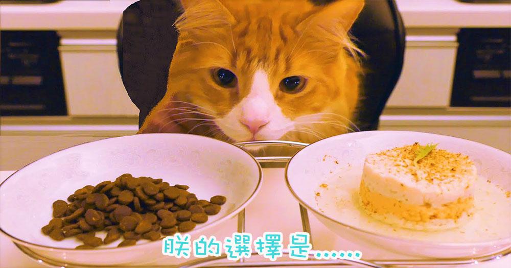 愛心料理對決普通乾糧!日本廚師為主子炮製美味晚餐~看主子如何選擇!