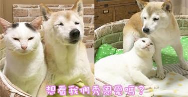 日本相親相愛的喵與汪~一起生活的柴犬與喵星人超有夫妻相~