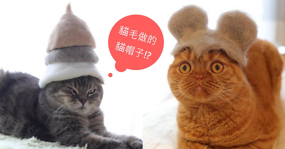 奴才親手製作「貓毛帽子」,以後毛脫下了也不浪費!冬天還可以好好保暖啊~