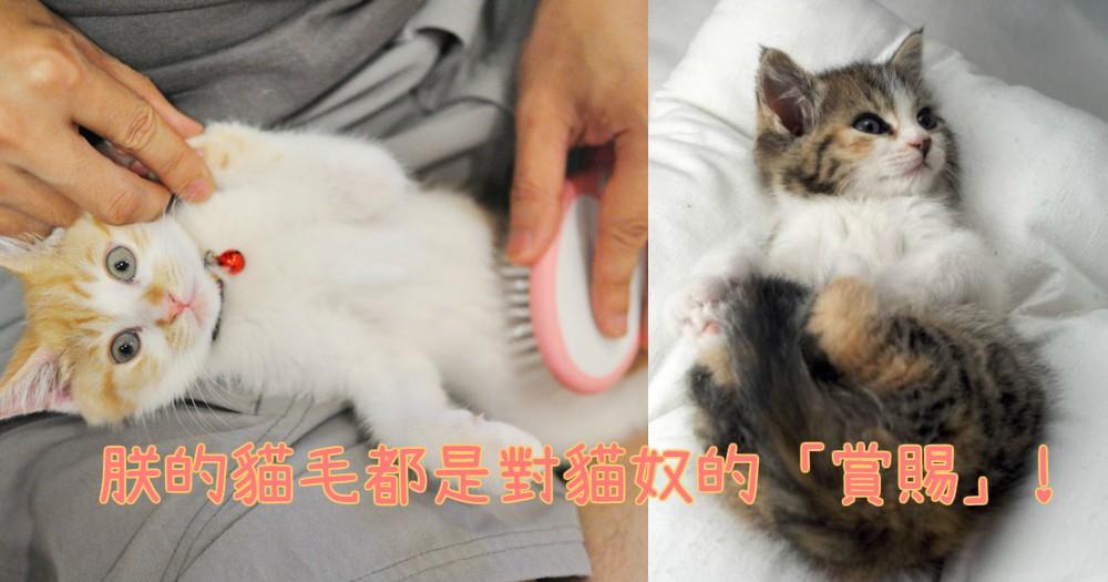 家裡到處都滿佈貓毛實在超煩惱!必讀的4大秘訣,來進行對抗貓毛大作戰吧!