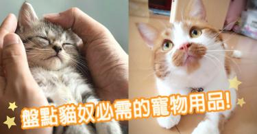 為主子打造理想的家!盤點貓奴必需的寵物用品~讓主子每天都愛賴在家!
