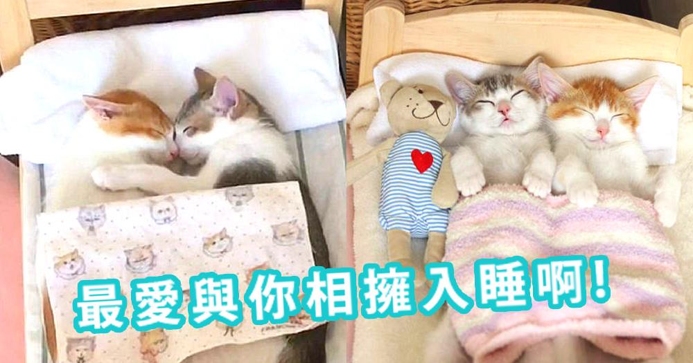 永遠都要相擁而睡!感情好的貓咪就是要同床共寢~主人還為我們預備了可愛的迷你床!