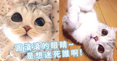 圓滾滾的大貓眼要迷倒世人了!日本網紅貓咪HANA~水汪汪的大眼睛讓人視線都不想離開!